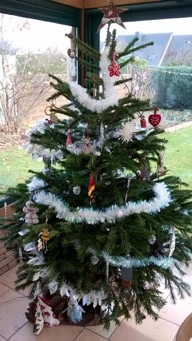 Etoile de Noël