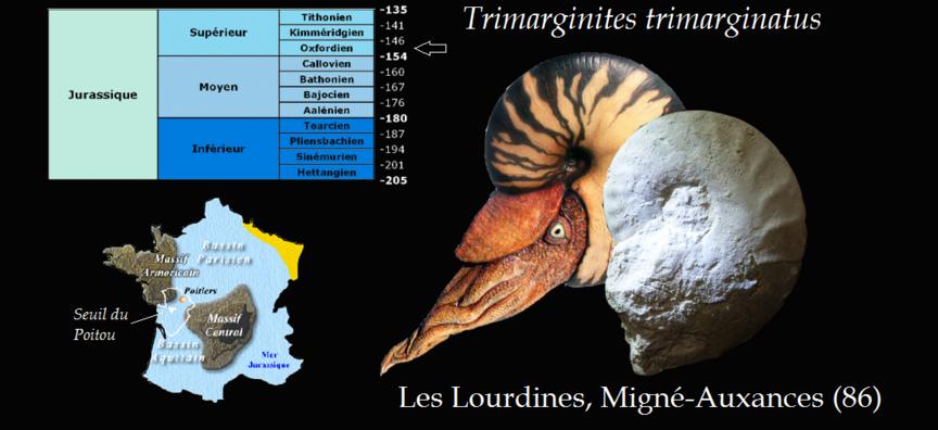 Trimarginites trimarginatus des Lourdines