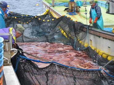 Japon : le poisson des zones contaminées dans les cantines cambodgiennes