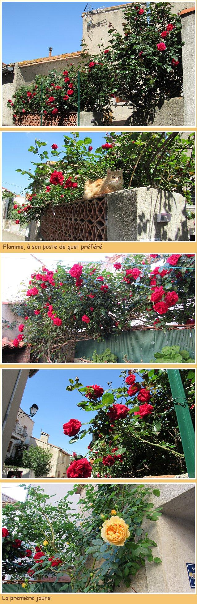 Roses de Pâques