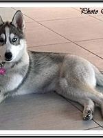 Mylka (3,5 mois)