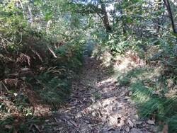 Cambo - Chemin des sources - Iturbidea