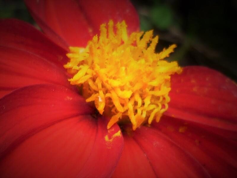 Nature rouge ... Pour Khanel