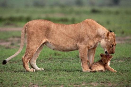 La mère réconforte son petit térrorisé