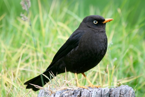 Costa Rica les oiseaux