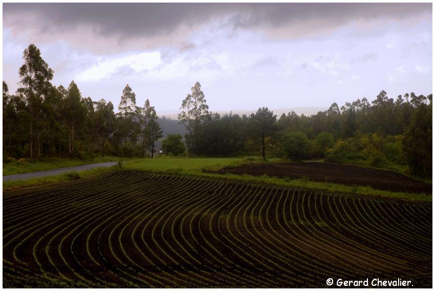 Camino para Fisterra # 10 - La campagne Galicienne sous la pluie.