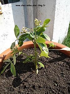 jardin mars 201013