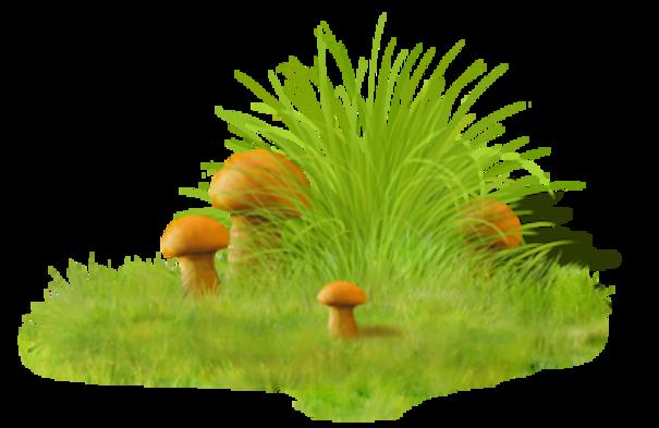 Les champignons