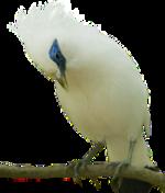 Guillaume et son oiseau