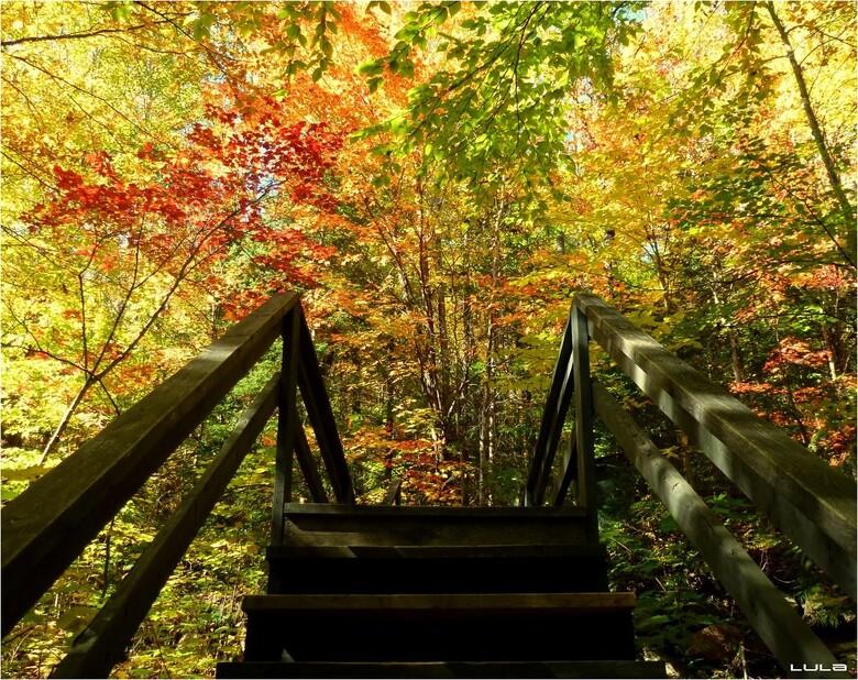 Le parc Doncaster en automne