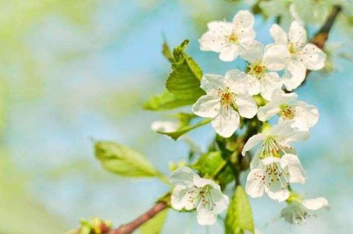 Pourquoi le printemps commence le 20 mars cette année, et non le 21