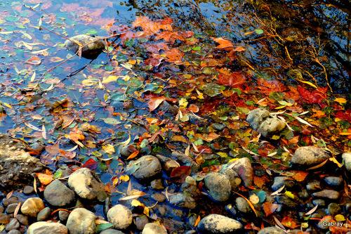 Lacroix Falgarde en automne : bord de l'Ariège ... n 2