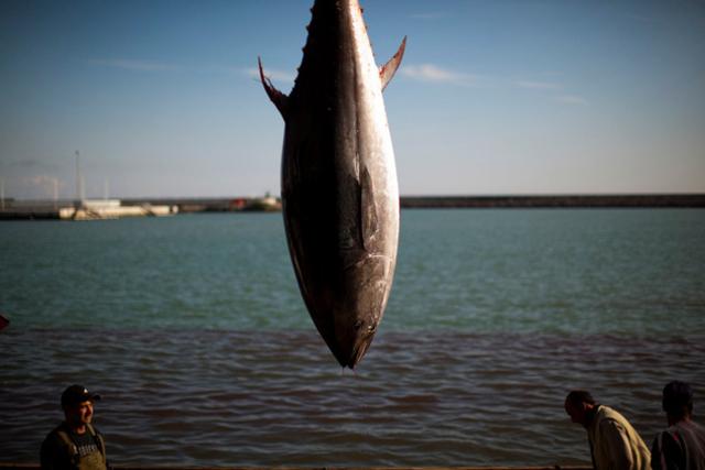 Les populations d'animaux marins ont chuté de moitié