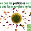 pesticides-spermatozoides