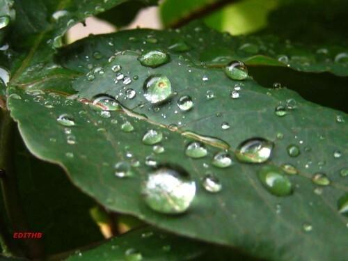 gouttes d'eau 27-9-09 001
