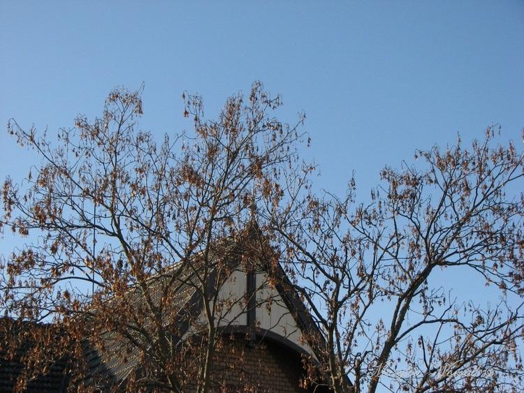 Ciel d'Alsace 298