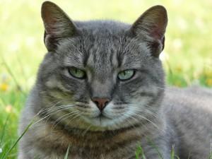 chat-caty-3.jpg