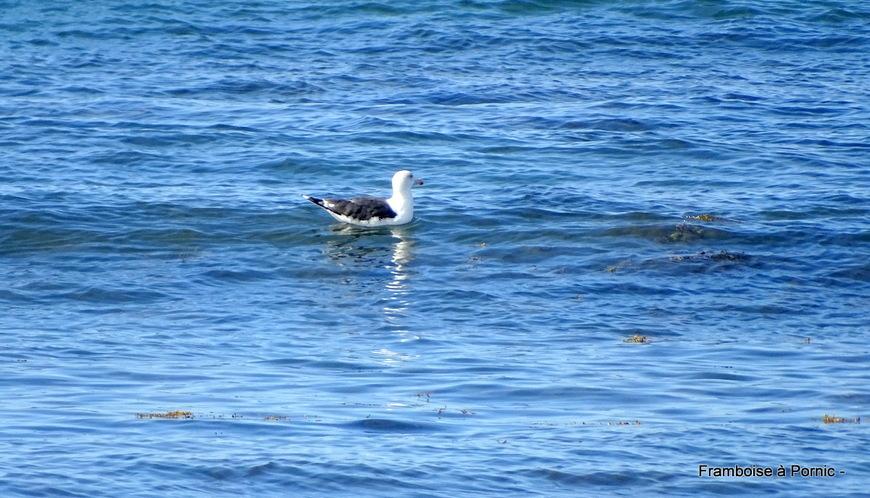 Oiseaux du littoral en septembre