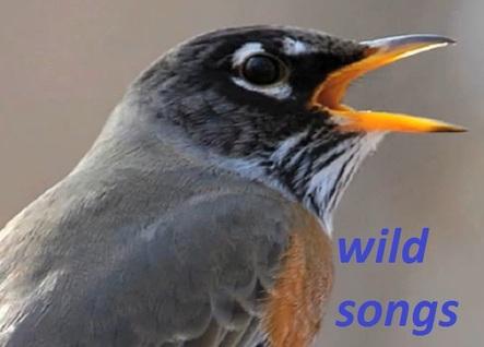 Chants d'oiseaux romantique