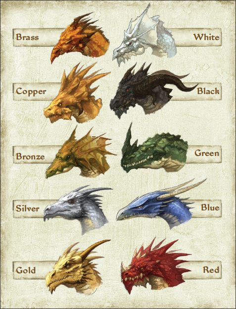 atamajakki:  Dragon busts fromPathfinder: Dragons Revisited. Metallics are on the left, Chromatics are on the right.: