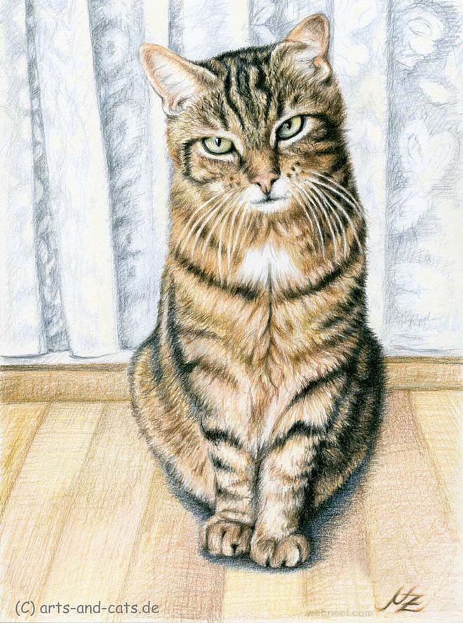 cat animal drawing