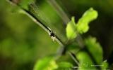 Araignée - p47