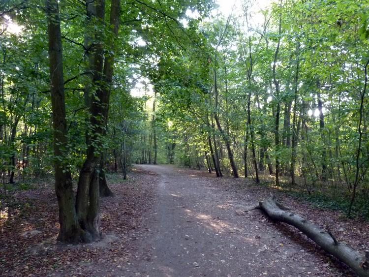 Bois des Roussières