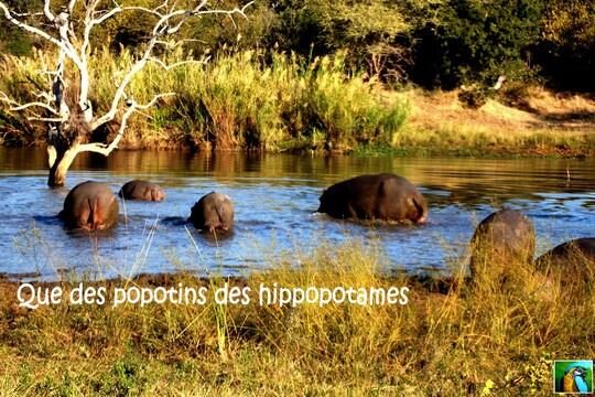 Afrique du Sud: suite du safari 2/2