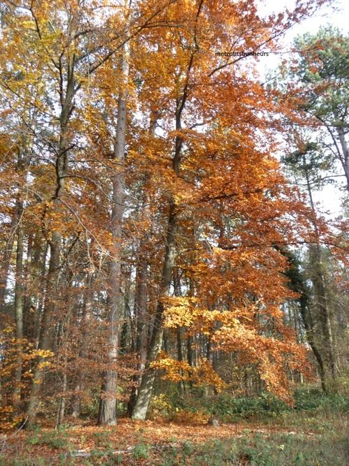 Couleurs d'automne....