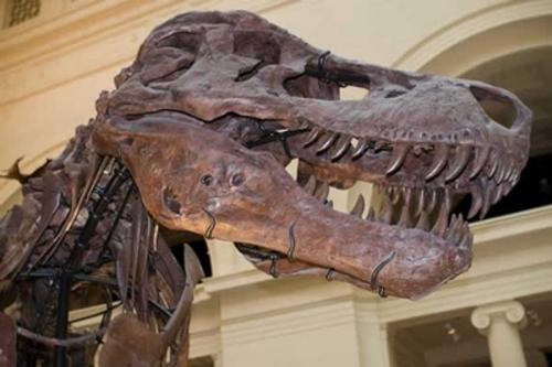 Le Tyrannosaure - Le roi des lézards