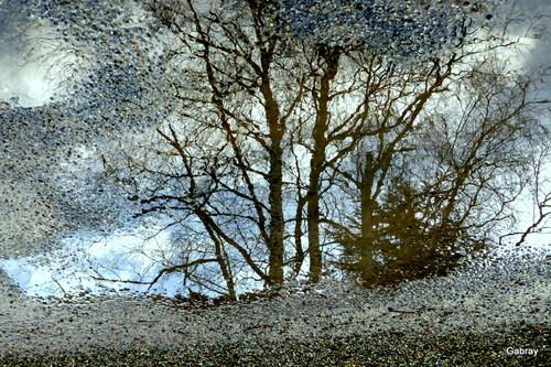 Dans ma rue: flaques & reflets