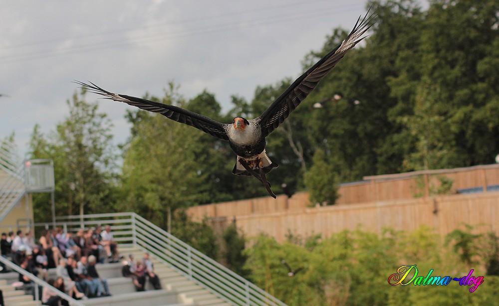 le spectacle des oiseaux au zooparc de Beauval est magnifique!!!