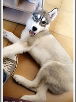 Nayak (4 mois)