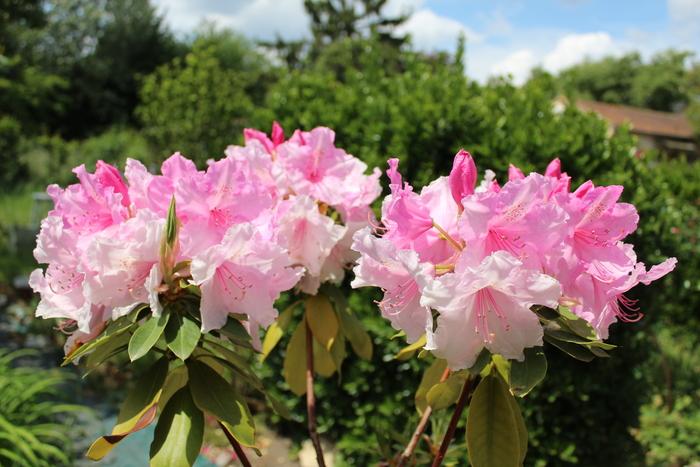 Fleurs du samedi