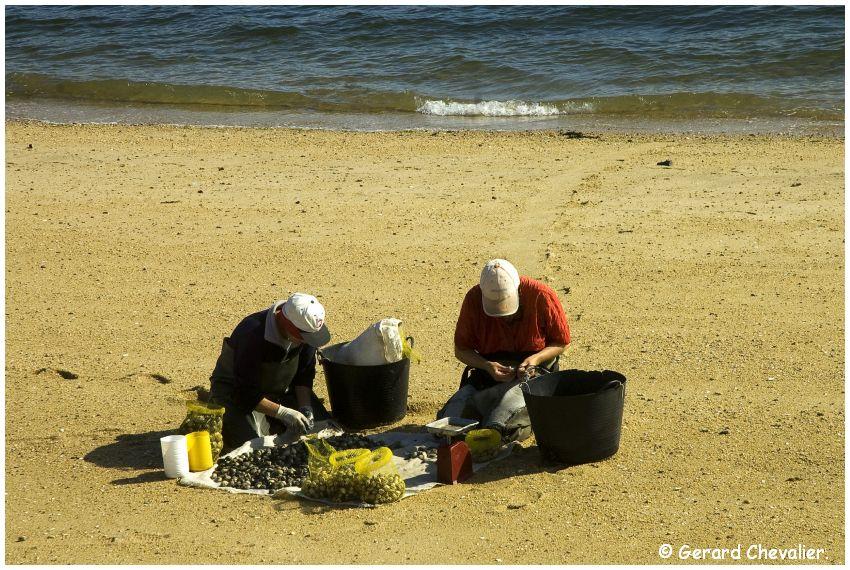 Galice - Les mariscadoras #5