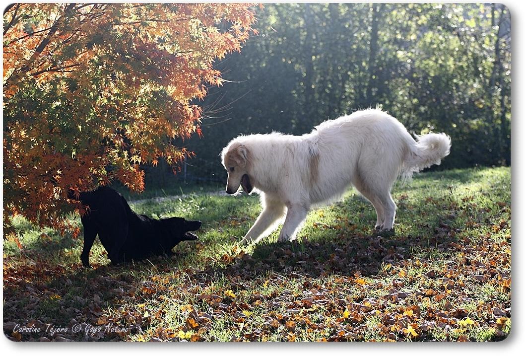 Cimba et Kinouk, chien modérateur