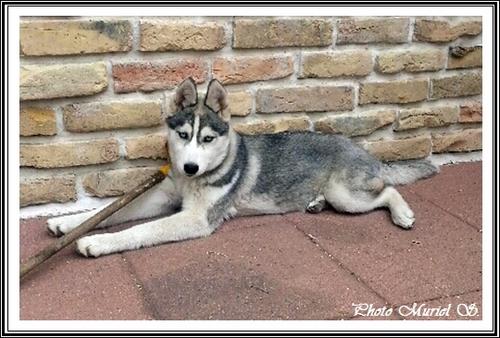 Jaya (5 mois)