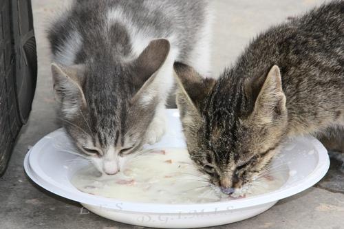 Chat à faim