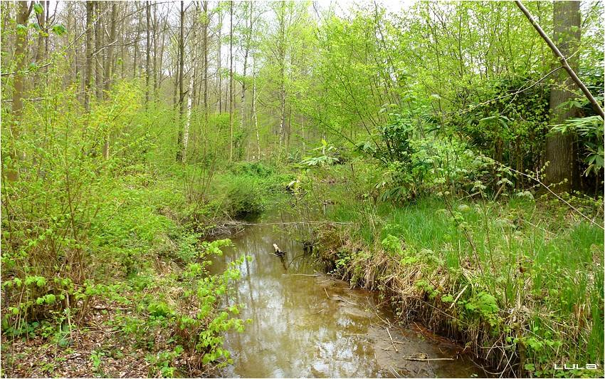 Le Bois de Lauzelle