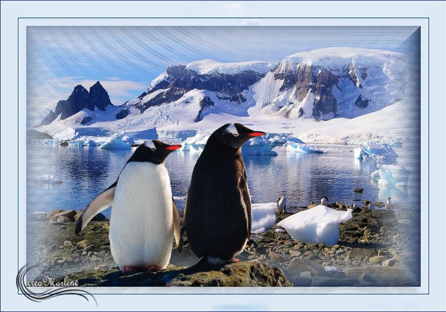 ♥ Les pingouins ♥