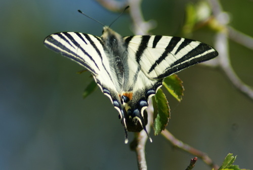 Bon weekend........les Papillons sont de retour...08.04.2017