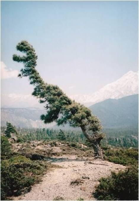 Indomptable Nature