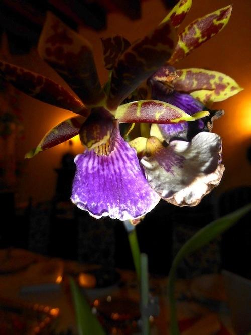 Un joli cadeau une orchidée.