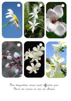 Cartonnettes fleurs blanches