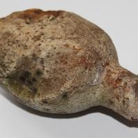 Oignon fossilisé allongé et troué