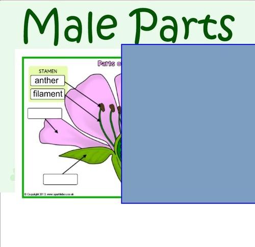"""CE2SC - Pollination: when plants MAKE """"babies"""" ♥"""