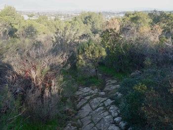 Le sentier caladé (vue vers le Nord)