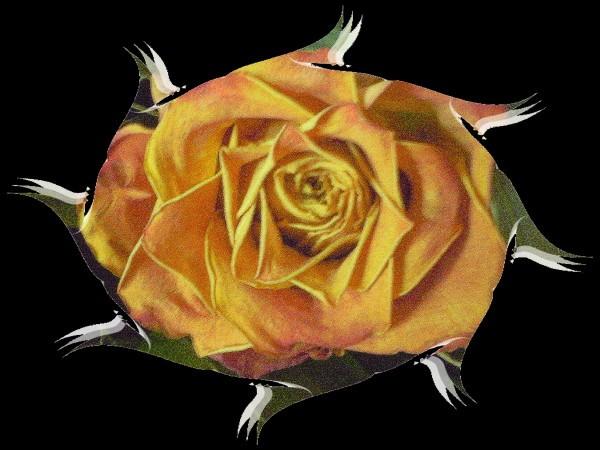 rosenoire