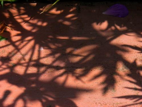 ombre geranium