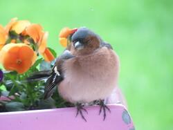 petit nouveau dans mon jardin